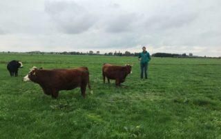 Hoogwaterboerderij kleine lichte koeien